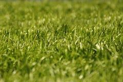 La hierba en el prado Textura Foto de archivo