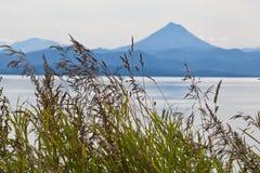 La hierba en la orilla de la bahía del mar Foto de archivo
