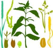 La hierba fijó 03 Imagen de archivo libre de regalías