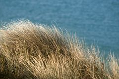La hierba gruesa crece en la línea de la playa del estuario del camello Imágenes de archivo libres de regalías