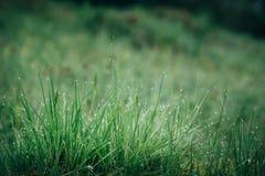 La hierba mojada verde fresca con agua de la mañana cae en las montañas, fondo natural Ciérrese para arriba con el foco bajo Imagen de archivo