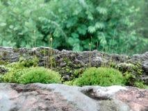 La hierba natural en los roos de la casa era Foto de archivo libre de regalías