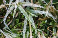 La hierba que consigue helada en las altas montañas en la estación del invierno de Tailandia Foto de archivo