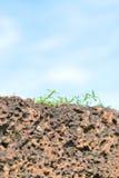 La hierba que crece en rocas con el cielo azul Imagenes de archivo