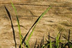La hierba sale del durmiente de madera Fotos de archivo