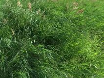 La hierba se mueve con el viento almacen de video