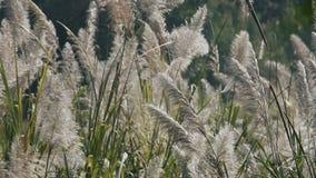 La hierba se sacude en el viento