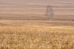 La hierba seca en la primavera temprana del campo, entre la hierba es un árbol Fotografía de archivo libre de regalías