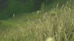 La hierba seca y el viento con reenfocan almacen de metraje de vídeo