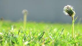 La hierba verde metrajes