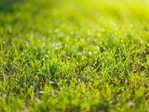 La hierba verde con lluvia cae el fondo de la primavera fotos de archivo libres de regalías