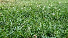 La hierba verde con suavemente enrolla almacen de video