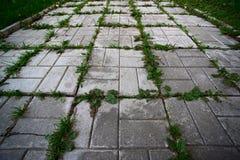 La hierba verde crece a través de los adoquines urbanos Foto de archivo
