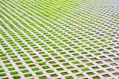 La hierba verde crece a través de la teja Fotografía de archivo libre de regalías