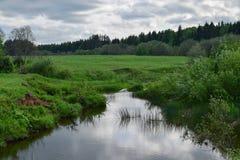 La hierba verde en la orilla, el bosque y las nubes grises ajardinan Imagenes de archivo