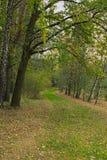La hierba verde formó una trayectoria agradable en el bosque del otoño Imagen de archivo libre de regalías