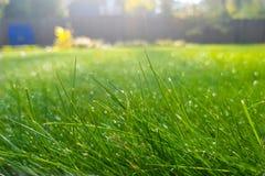 La hierba verde fresca con descensos de rocío, césped hermoso con el sol irradia en madrugada Imágenes de archivo libres de regalías