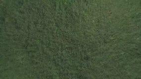 La hierba verde fresca tirada de la visión superior, con el viento fluyendo, inconsútil tejó la textura, pequeño césped bajo, per almacen de metraje de vídeo