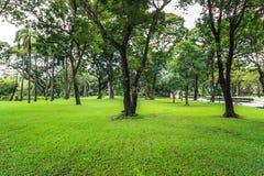La hierba verde y los árboles son parque público Imagenes de archivo