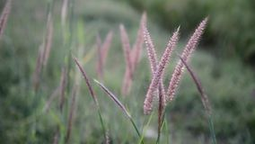La hierba y el viento almacen de metraje de vídeo