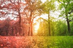 La hierba y los árboles en el parque iluminaron la luz del sol retroiluminada entonada en pendiente rojo-verde Imagenes de archivo