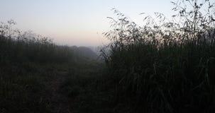 La hierba y la otra vegetación después de la lluvia 4k video almacen de video