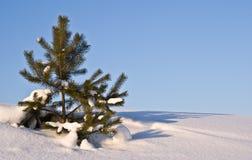 La historia del invierno Foto de archivo