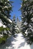 La hiver-vue photo stock