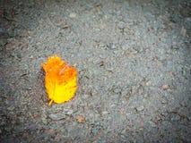 La hoja amarilla caida desconocida en la calle que camina en el Jeju Foto de archivo