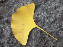La hoja amarilla del Ginkgo en el granito que pavimenta Imágenes de archivo libres de regalías