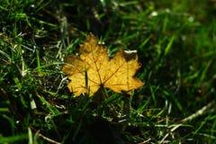 La hoja amarilla miente en hierba y es hecha excursionismo por la luz del sol Foto de archivo libre de regalías