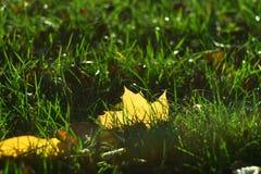 La hoja amarilla miente en hierba y es hecha excursionismo por la luz del sol Fotografía de archivo