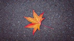 la hoja Amarillo-roja del árbol miente en el asfalto texturizado gris imágenes de archivo libres de regalías