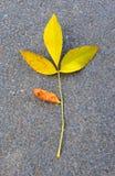 La hoja caida-abajo del otoño contra el asfalto Fotografía de archivo