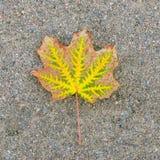 La hoja caida-abajo del otoño contra la grava Imagen de archivo libre de regalías