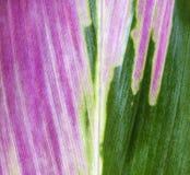 La hoja colorea la gama Fotografía de archivo