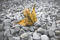 la hoja con el fondo de las rocas Fotografía de archivo