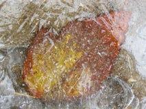 La hoja congelada Fotos de archivo libres de regalías