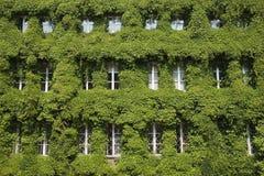 La hoja cubrió ventanas en Gdansk Imagen de archivo