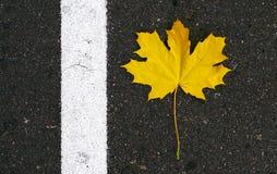 La hoja de arce amarilla miente en el asfalto y la raya blanca Fotografía de archivo
