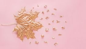 La hoja de arce color de rosa del oro del otoño con los elementos desmenuza en fondo del papel de rosa en colores pastel Concepto imágenes de archivo libres de regalías