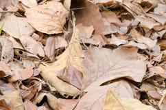 La hoja de Brown en la tierra tiene enfermedad Foto de archivo libre de regalías