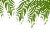 La hoja de palma siluetea el fondo Hojas tropicales Imagen de archivo