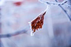 La hoja del abedul cubierta por la nieve Imagen de archivo libre de regalías