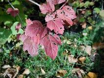 La hoja del detalle del otoño Foto de archivo