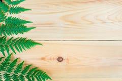 La hoja del helecho en la tabla de madera Foto de archivo