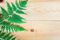 La hoja del helecho en la tabla de madera Imágenes de archivo libres de regalías