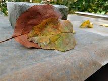la hoja del otoño Foto de archivo