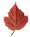 La hoja del otoño aisló Foto de archivo
