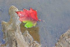 La hoja del otoño de un árbol miente en un charco Foto de archivo libre de regalías